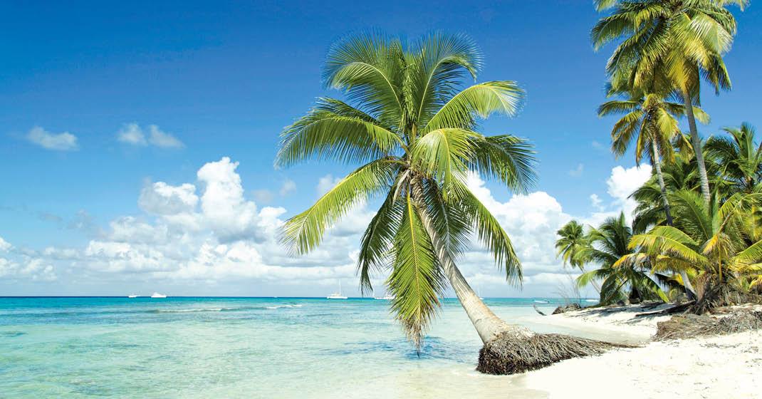 Karibik, weißer Sandstrand und Palmen