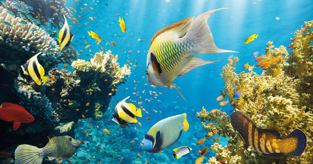 Unterwasserwelt Cozumel