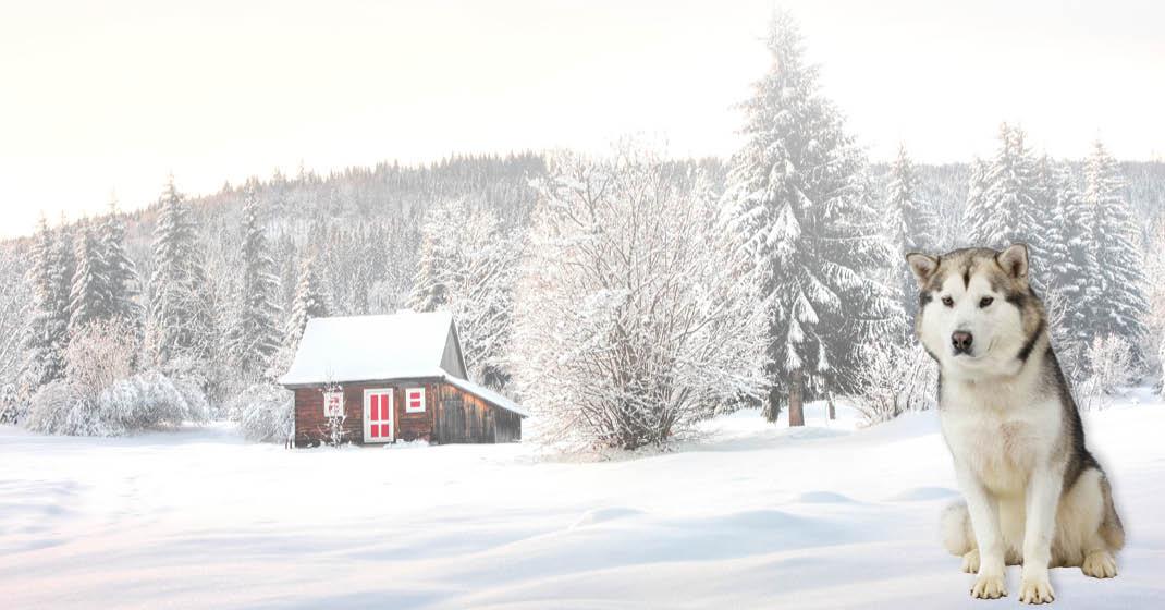 Nordische Polarlichter_Winterlandschaft mit Huski