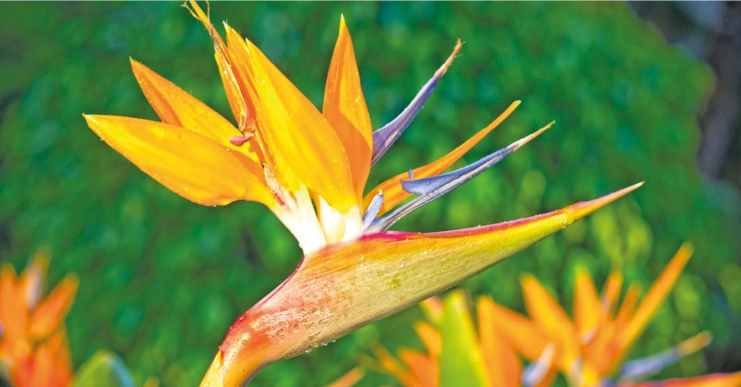 Madeira_Blumenvielfalt