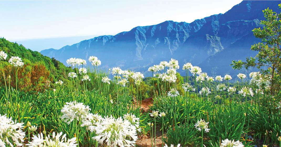 Madeira_Wandern_Blumen_Gipfel