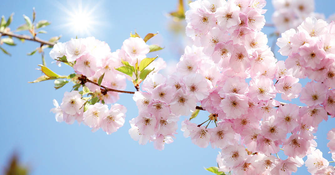 Mallorca Mandelblüte Wandern_Blüten
