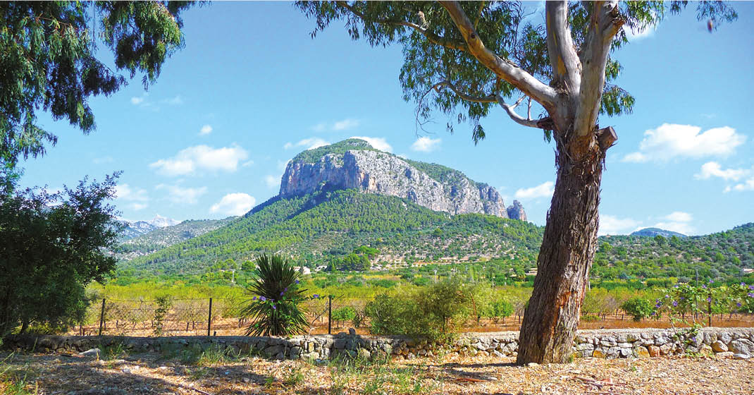 Mallorca Mandelblüte Wandern_Landschaft