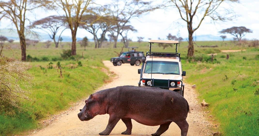 Suedafrika_Jeep-vor-Nilpferd