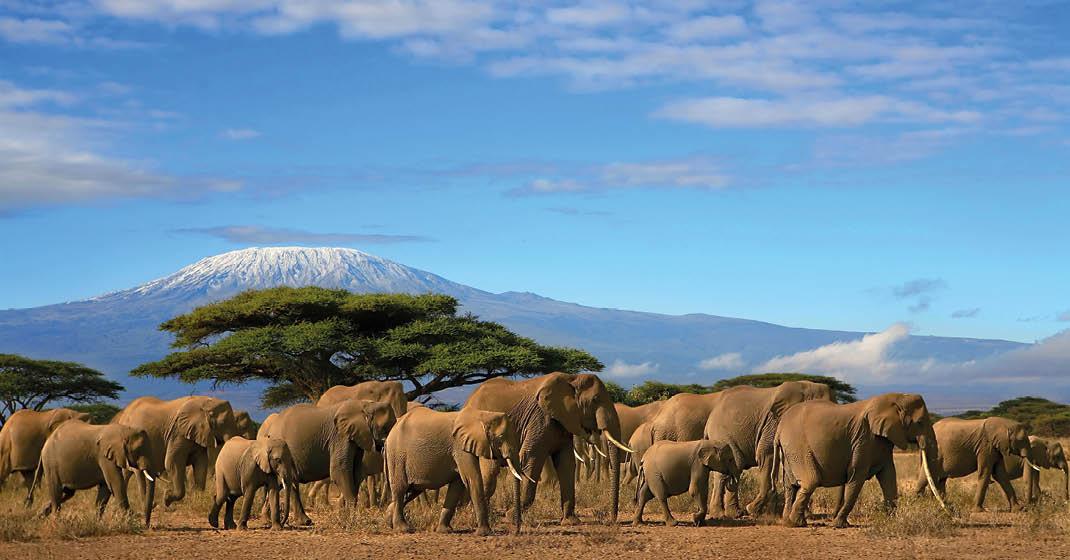 Tansania_Elefanten