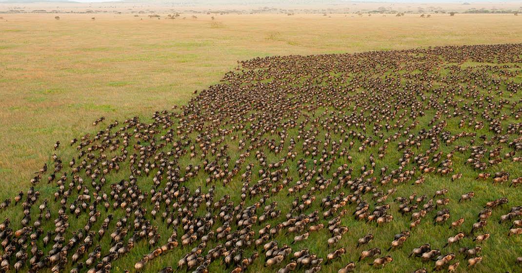 Tansania_Migration_atemberaubende-Tierwanderung
