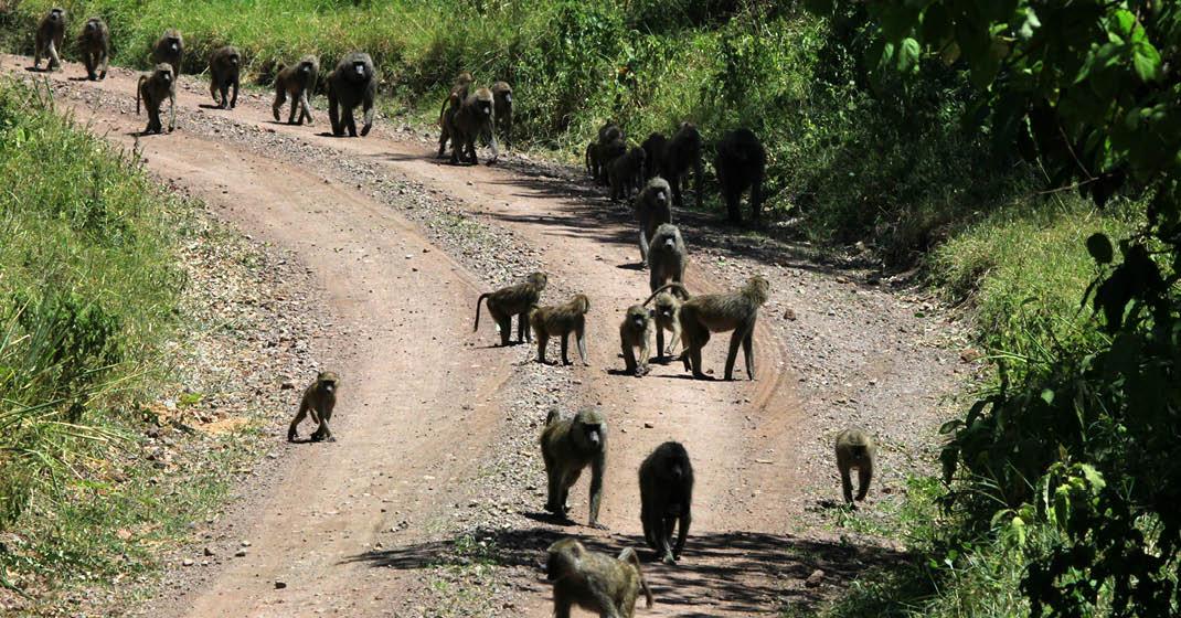 Tansania_Tierwelt