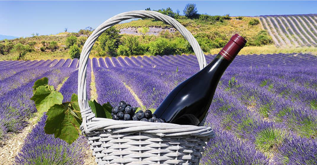 Provence_Camargue_Lavendel