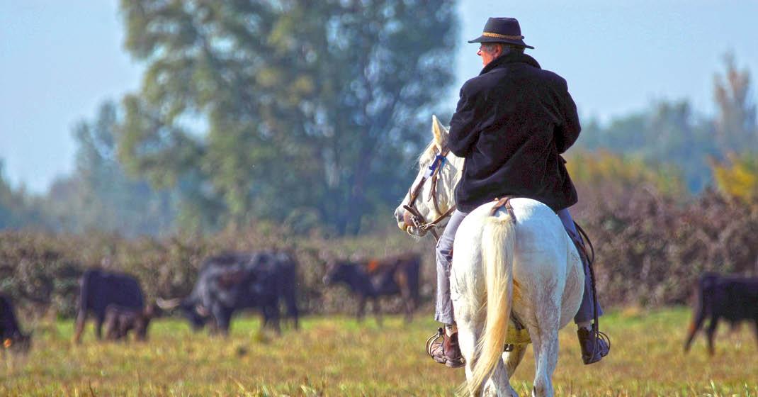 Provence_Camargue_weiße Pferde, schwarze Stiere