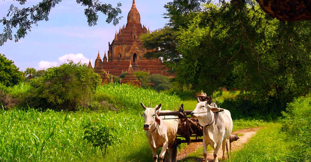 FL8620_Myanmar_4