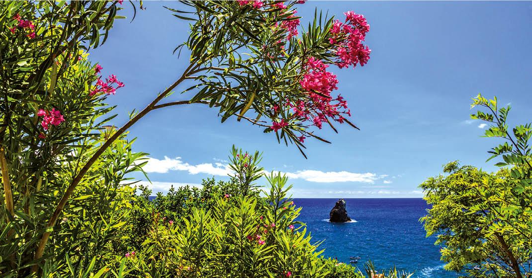 Madeira_BU8206_Funchal_Madeira