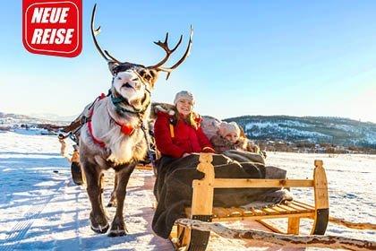 Schlitten mit Elch in Lappland