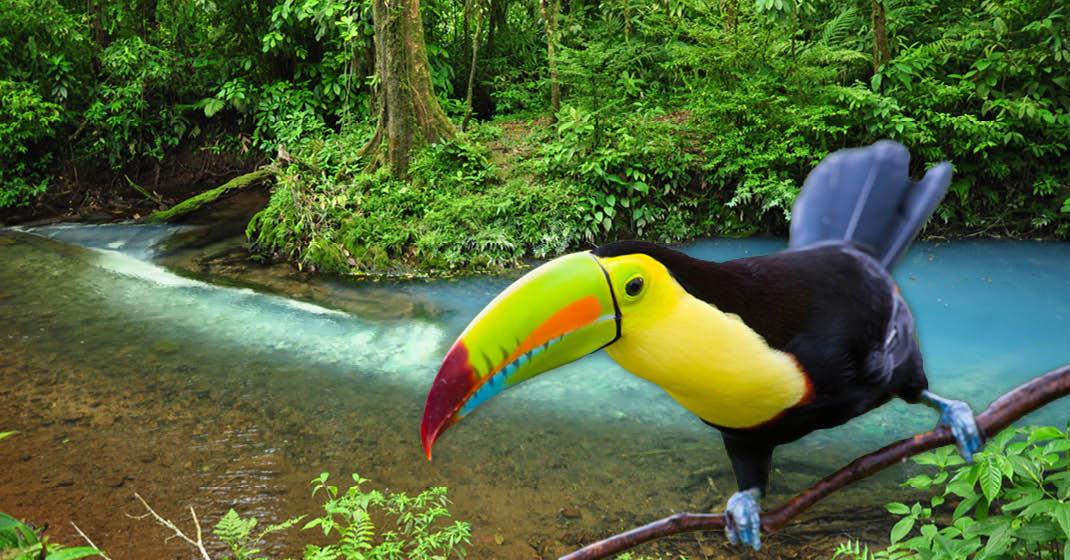 FL9267_Costa Rica_2
