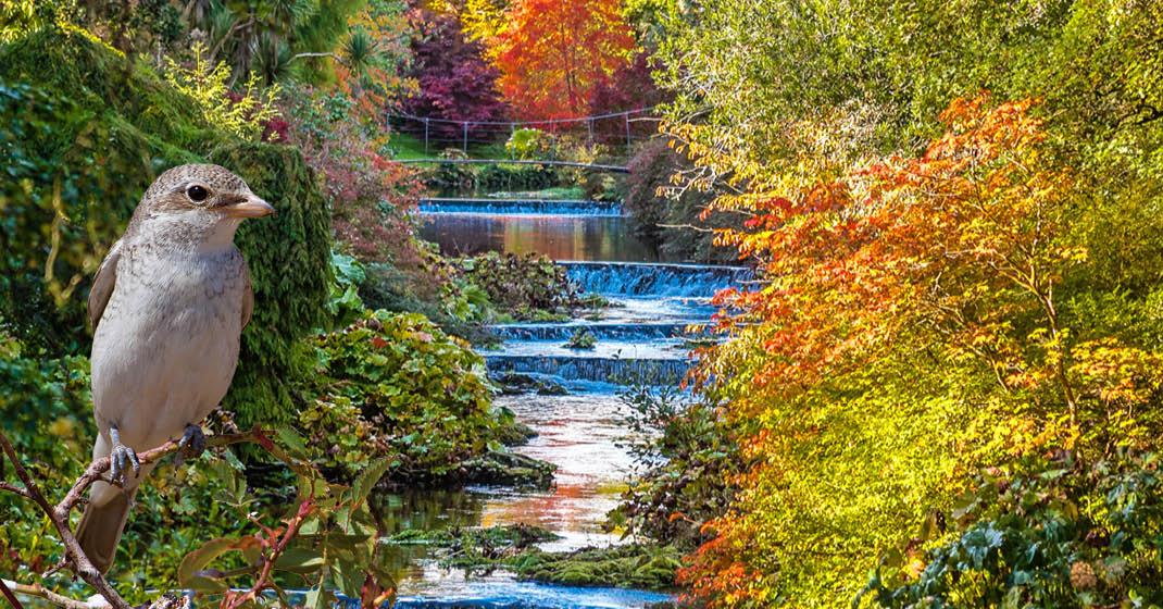 Irlands Schlösser und Gärten_4