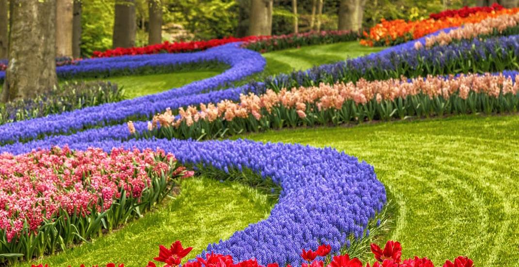 Tulpenblüte_4_Tage_1