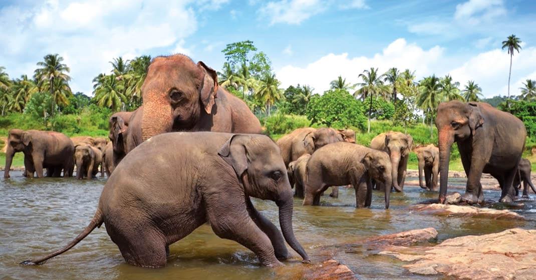 SriLanka_faszinierend_besonders_individuell_8