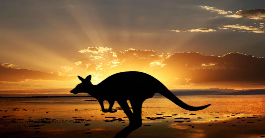 FL0411_Australien_Känguruh