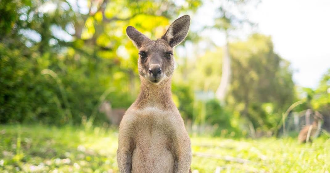 FL0411_Australien_typisch