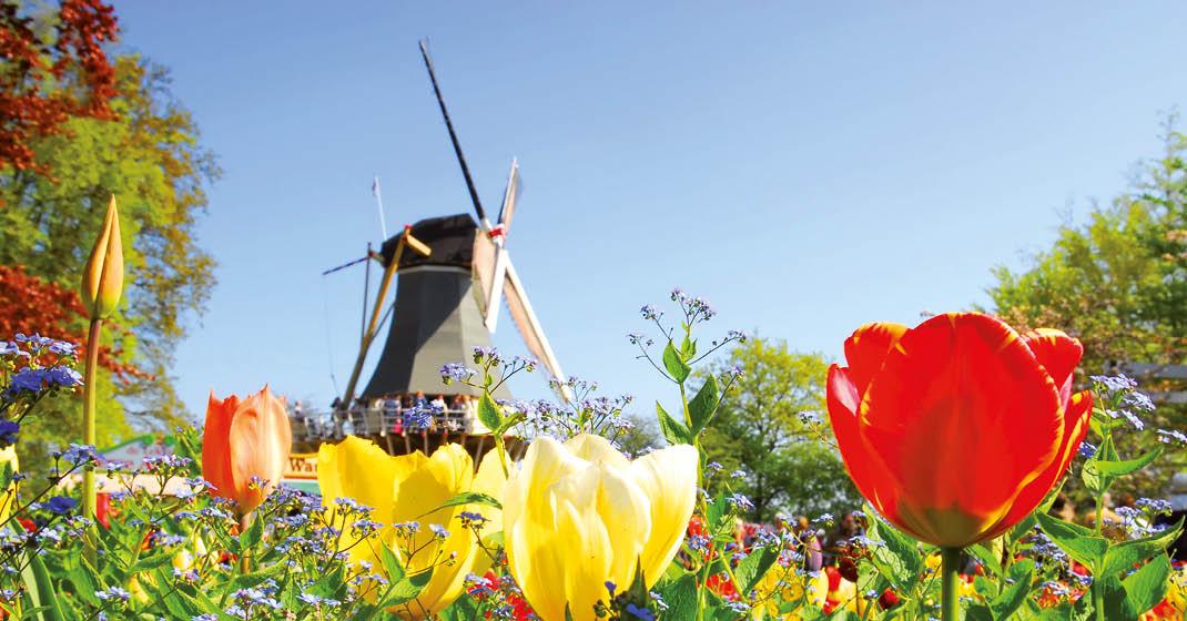 KF0071_MSAlina_Holland im Frühling